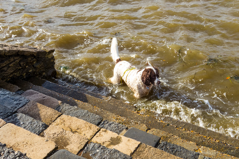 He's definitely not sure about the waves slapping against the steps