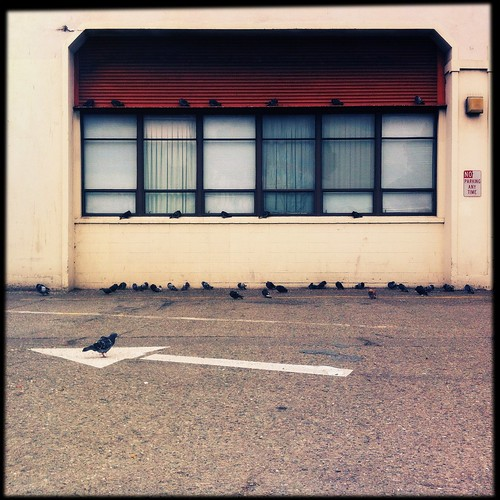 Photo of pigeons in SF by pixplz