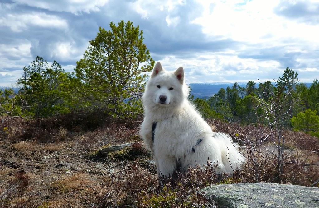 Nansen i skogen