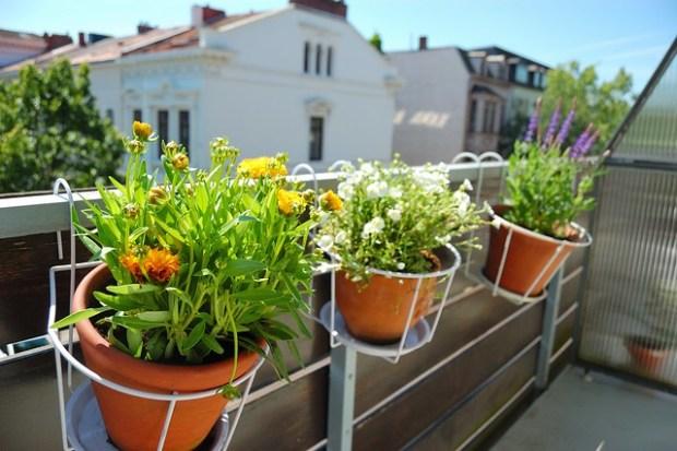 Balcony Garden: Bremen Edition