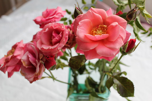 Sunday: delightfully decaying roses chez mama et papa
