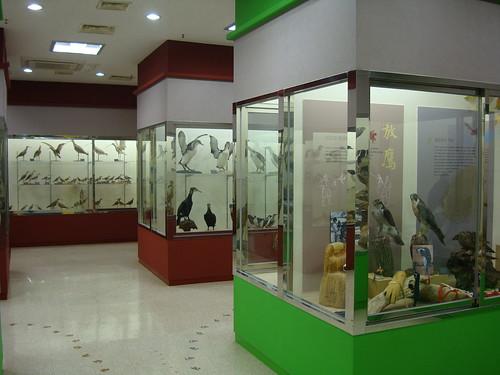 Koreas Vögel