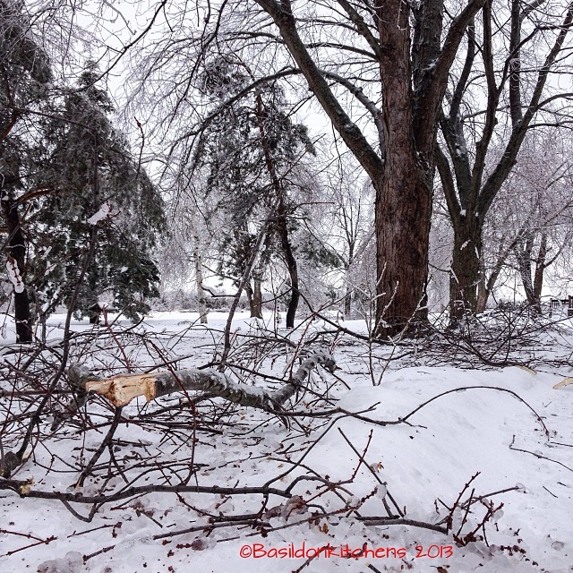 Dec 23 - tree {our poor trees took quite a beating from the ice storm}  #photoaday #tree #storm #ice #weather #winter