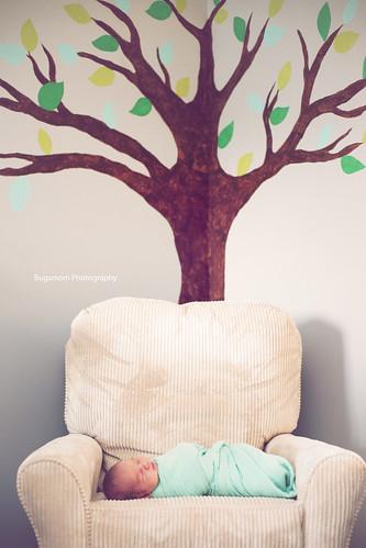 c under a tree