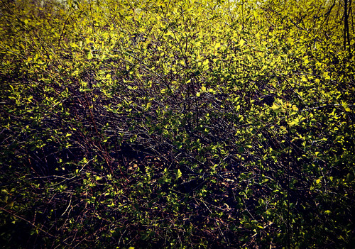 the Texture of Spring: Spring Green Leaves