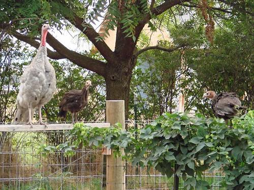 TurkeyTeens