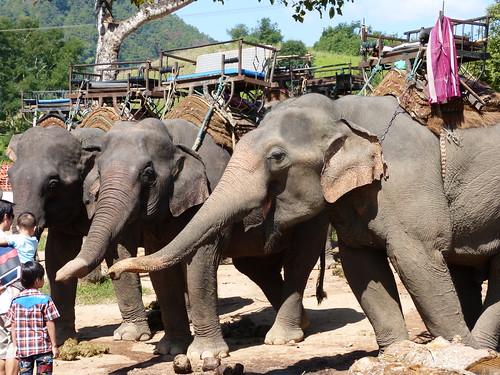 Ruammit Karen Elephant village
