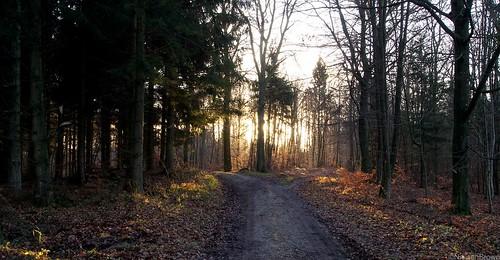 Sunrise Bidstrup Skov