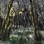 05 Viajefilos en Australia. New England NP 01