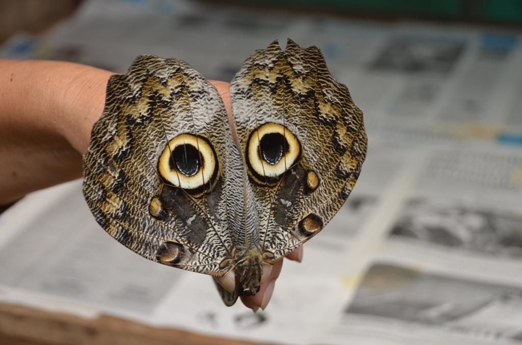 Forêt humide de Mindo.Papillon.1