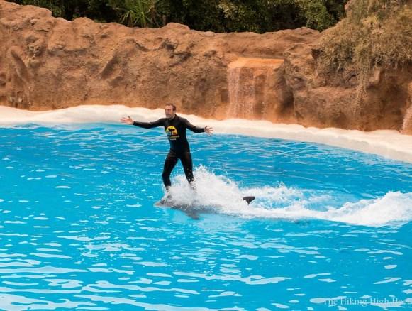 LoroParque-Delphinshow4