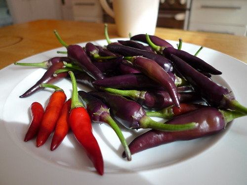 Purple Cayenne Peppers