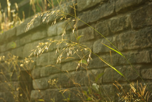 20130807-09_Grasses in early morning light by gary.hadden