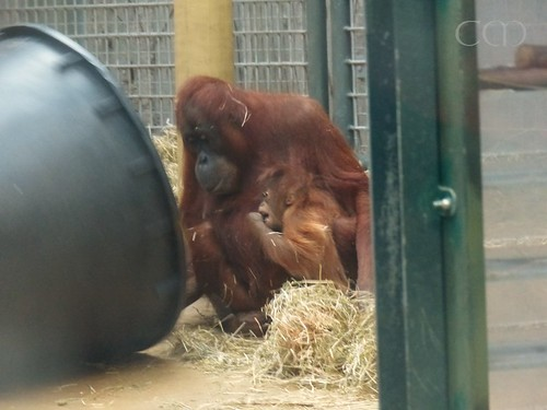 Cute little Orang!