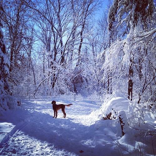 Clover in the winter wonderland