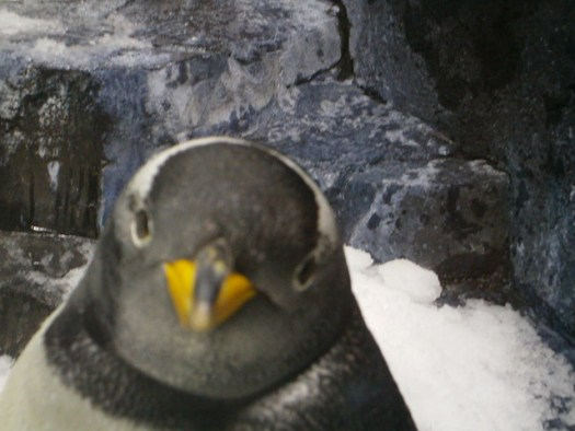 Staring down a penguin