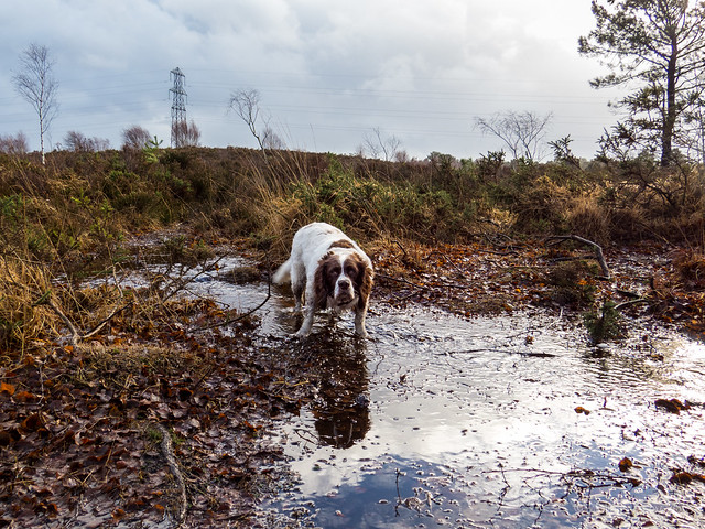 Max is in puddle heaven