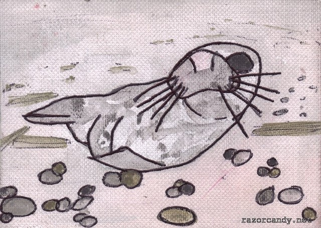 Seal in Cornwall (1)
