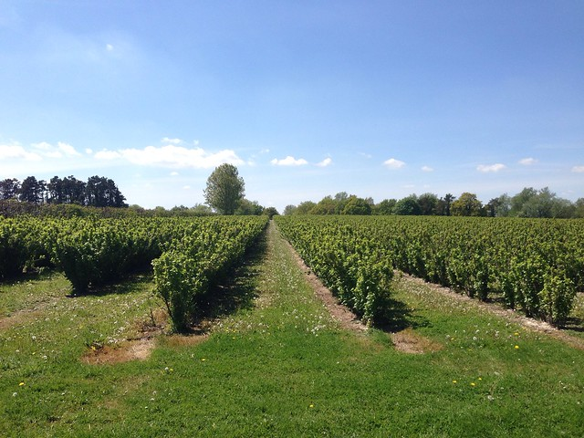 Fruit farm, near Gressenhall