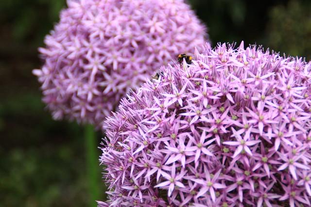 Flowers at Kew Royal Botanical Gardens