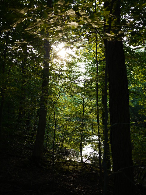 setting sun through the trees