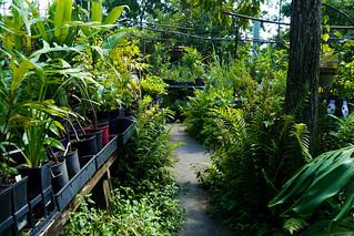 Edible Landscapes  008