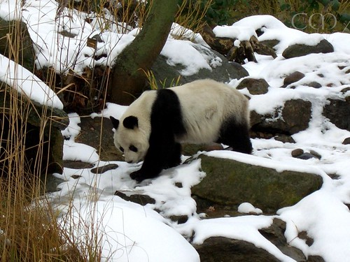 Today we remember Bao Bao...