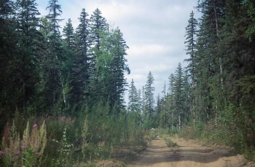 #holzvonhier Bild Urwald in Sibirien