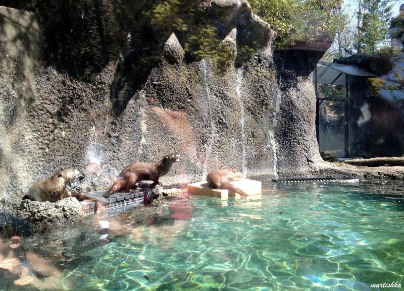 Oakland Zoo (27)