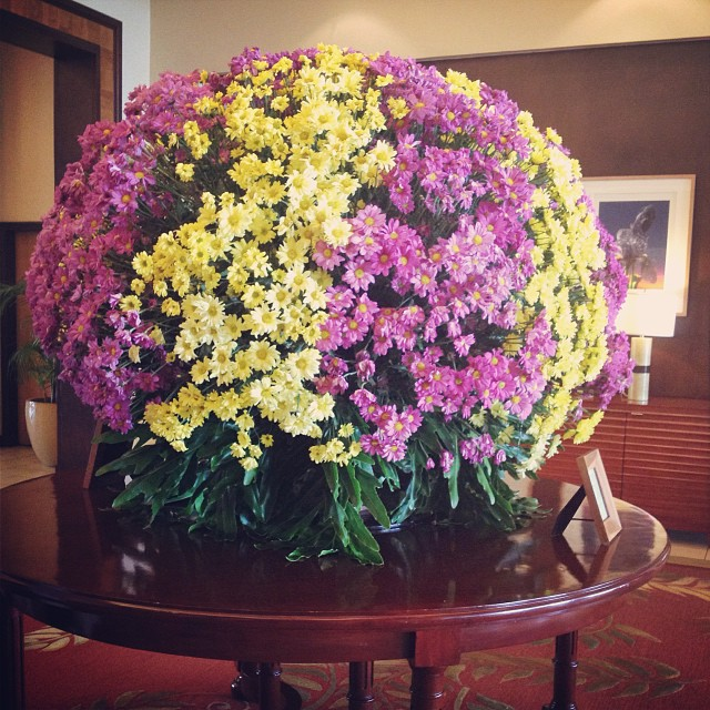 A huge ball of mums.