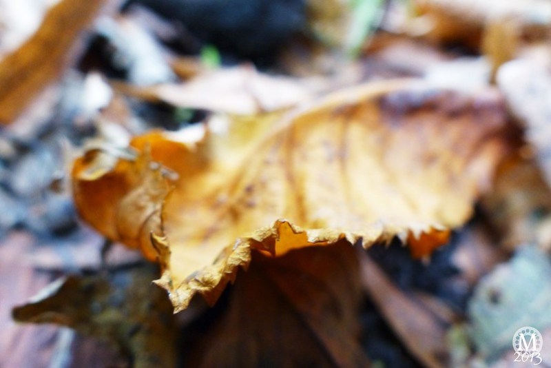 Autumn in Bedford's Country Park