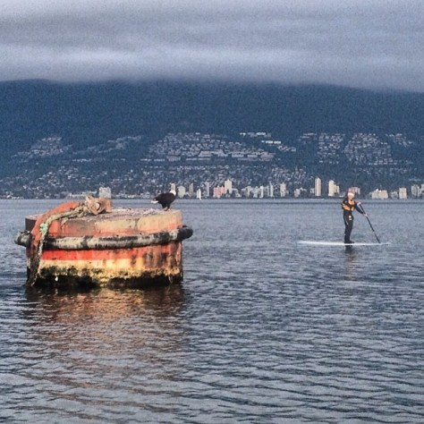 Boxing Day paddle in English bay. Watched two eagles eating a seagull on the tugboat bouy