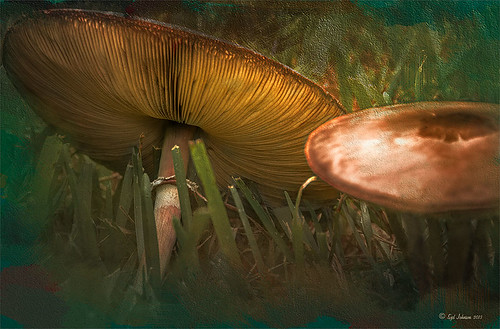 Image of two mushrooms treated with a texture