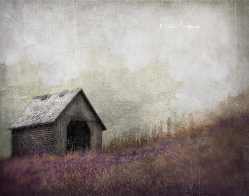 Walking Each Other Home by jamie heiden