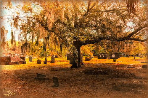 Image of Colonial Park Cemetary in Savannah, Georgia
