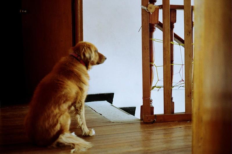 Melie esperando