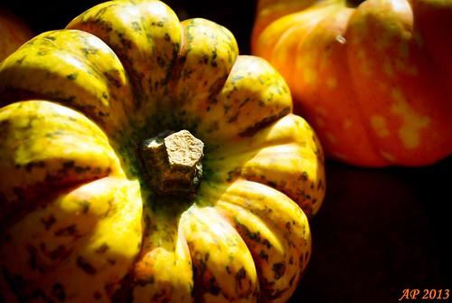 Récolte d'Automne / Fall Harvest