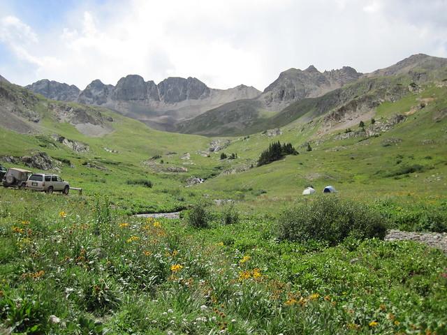 Wildflowers In American Basin, Colorado
