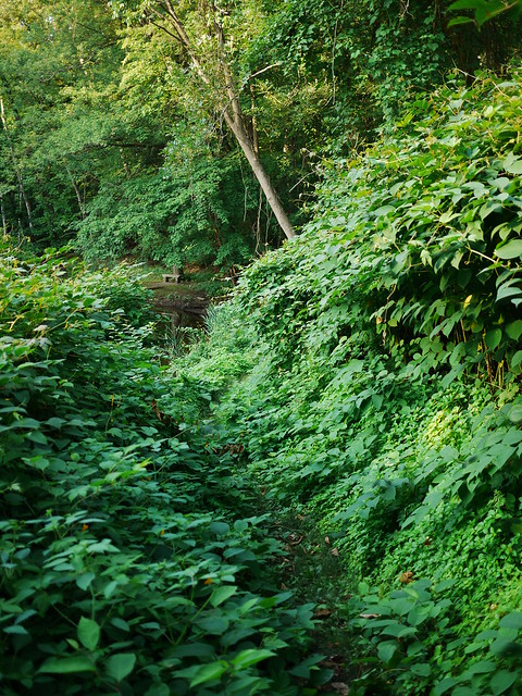 a narrow path through lush greenery