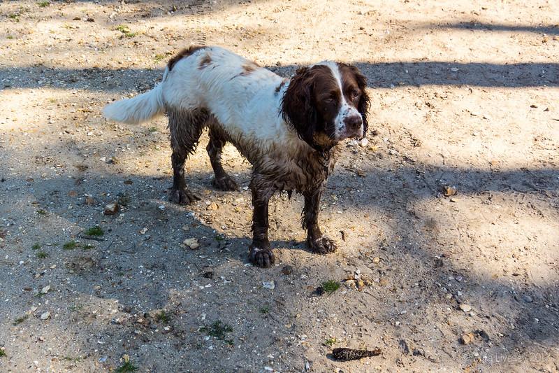Dirty Dog!