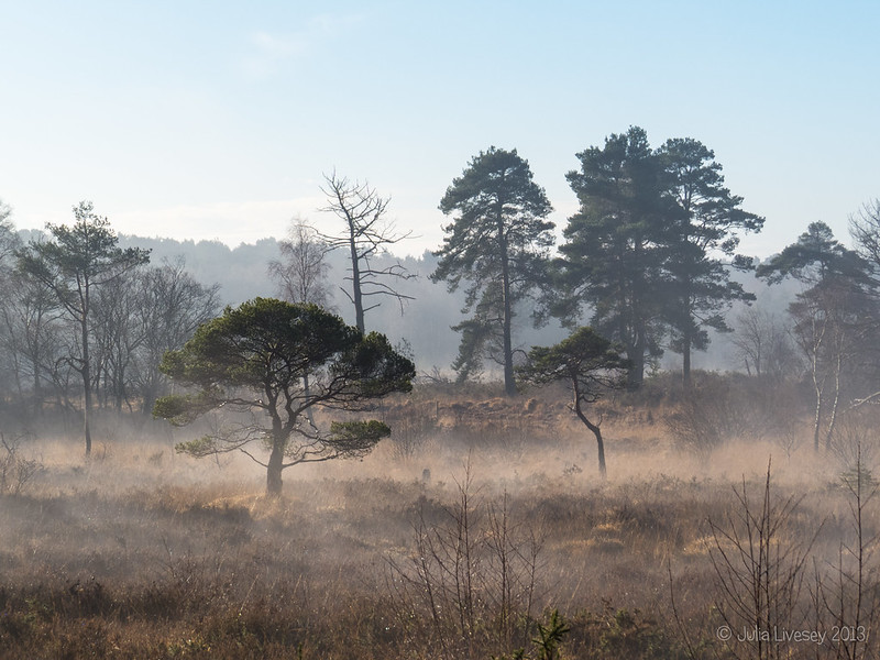 A misty morning on Upton Heath