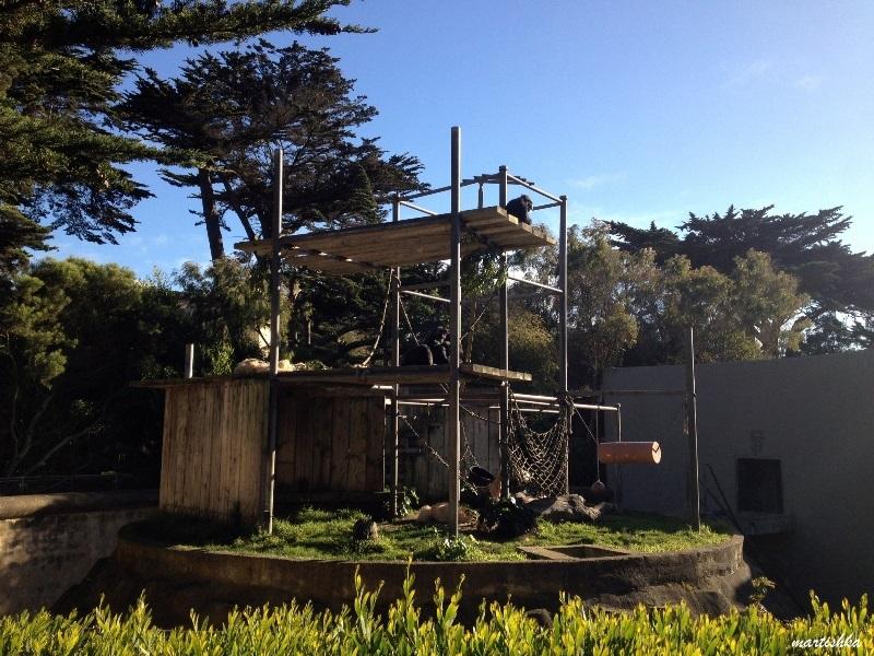 San Francisco Zoo (15)