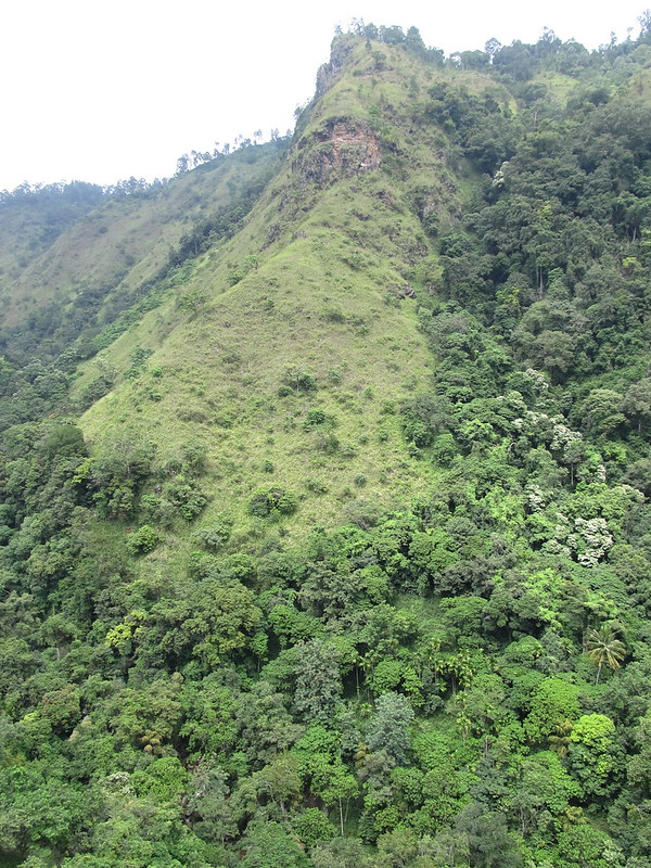 Green Ella hills