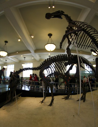 2013: American Museum of Natural History, New York #79