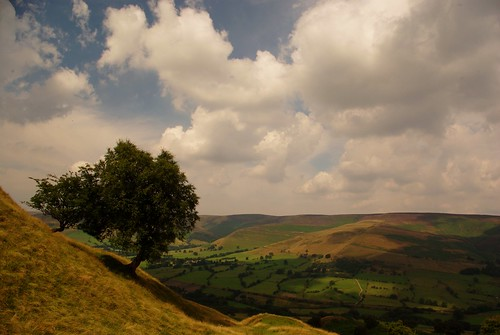 20130808-11_Lonely stunted trees - On The Great Ridge by gary.hadden