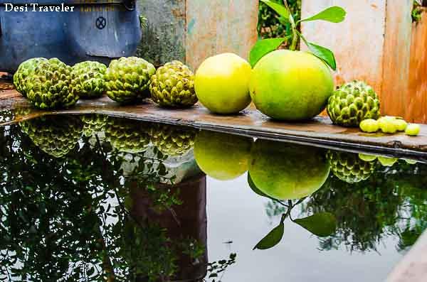 Naturaly grown organic grapefruit and gooseberry