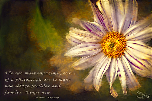 Image of miniature mums using Corel Painter in background