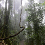 07 Viajefilos en Australia. Dorrigo Rainforest NP 15