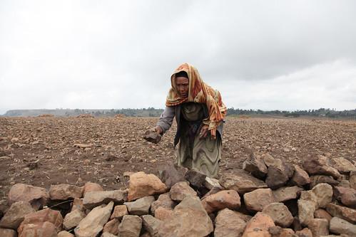 Tirunesh working on her farm