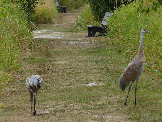 Cranes blocking the path